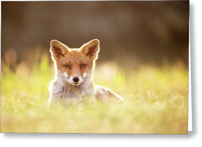 Sun Gazing Red Fox Greeting Card by Roeselien Raimond