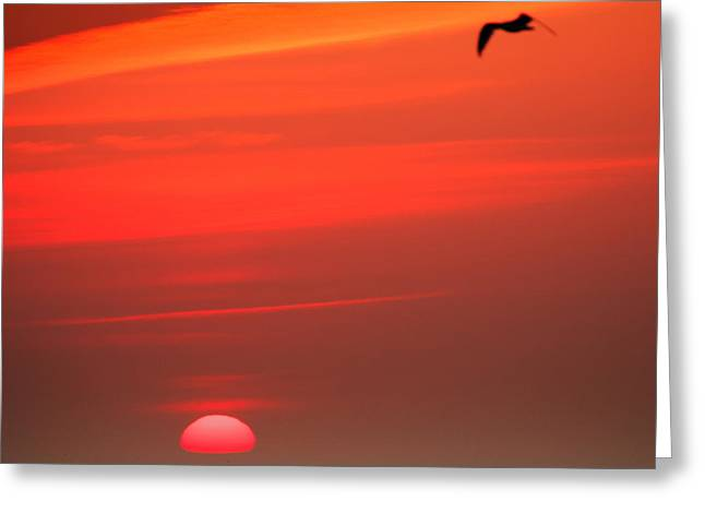 Sun Is Up Greeting Card by Dapixara Art