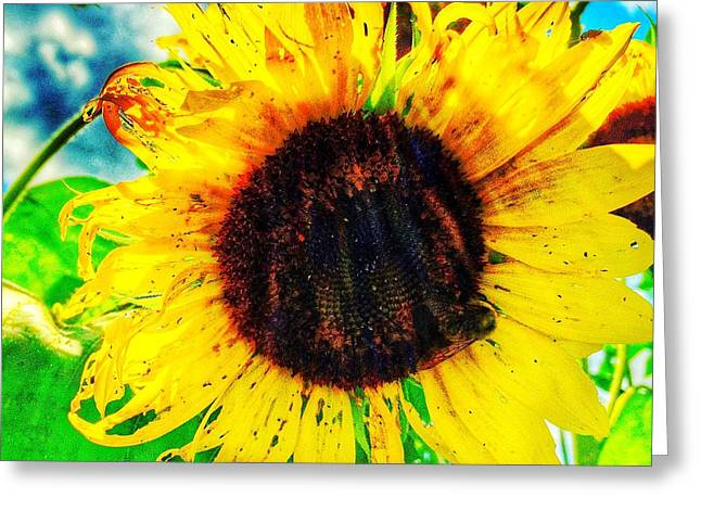 Greeting Card featuring the photograph Sun by Jame Hayes