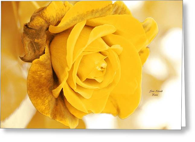 Greeting Card featuring the photograph Sun Kissed Rose by Athala Carole Bruckner