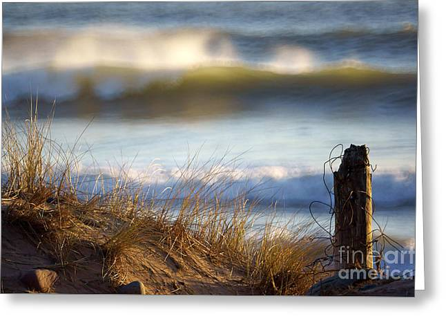 Sun Kissed Waves Greeting Card