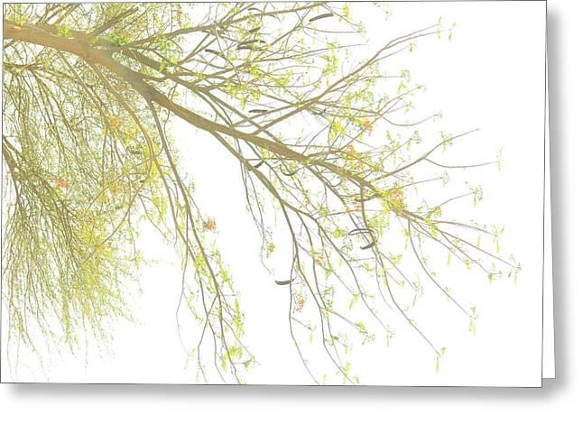 Sun Light On Tree Greeting Card