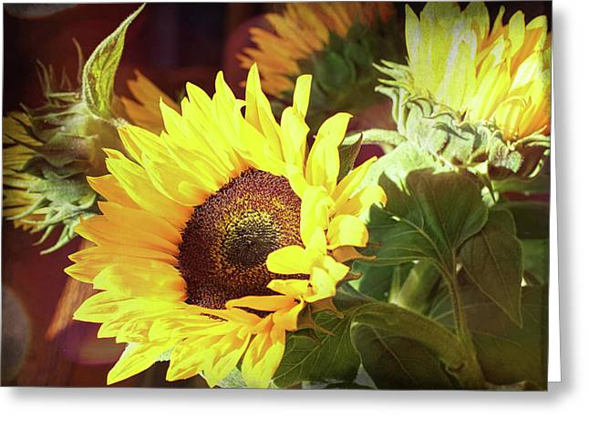 Greeting Card featuring the photograph Sun Of The Flower by Michael Hope