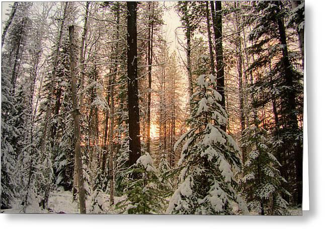 Sun Of Winter Trees Greeting Card