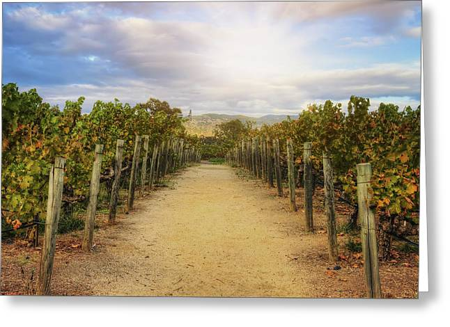 Sun Over Vineyard At Winery In Napa Valley 2 Greeting Card by Jennifer Rondinelli Reilly - Fine Art Photography