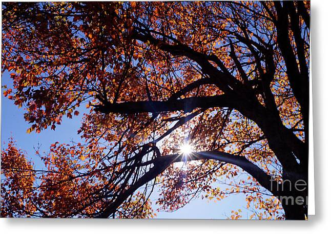 Greeting Card featuring the photograph Sun Peaking Threw by Debra Crank