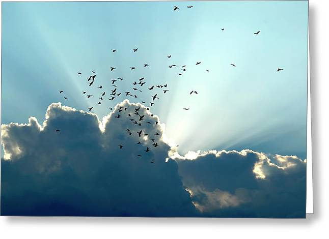 Sun Ray Aerobatics Blue Sky Greeting Card