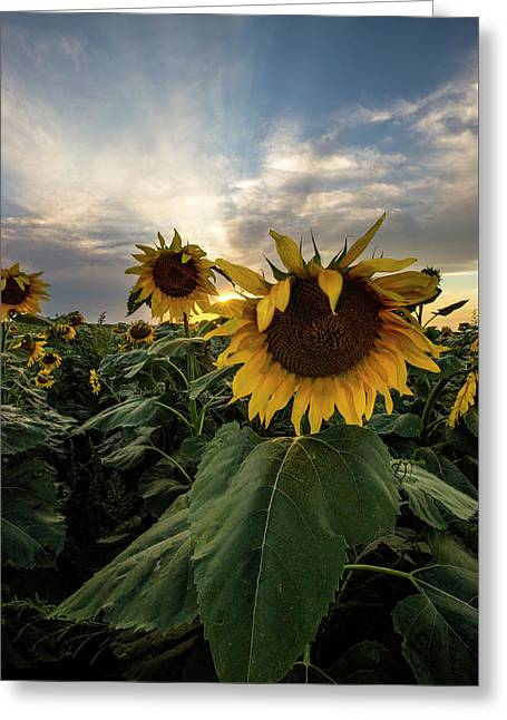 Greeting Card featuring the photograph Sun Rays  by Aaron J Groen