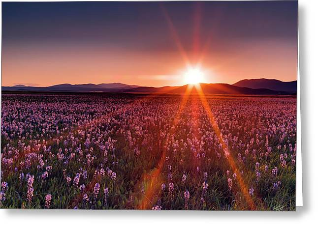 Sun Rays At Camas Prairie Greeting Card by Leland D Howard