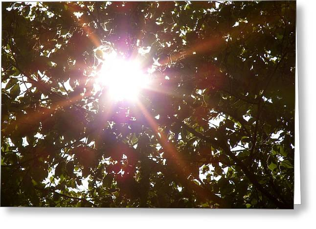 Sun Rays Greeting Card by JAMART Photography