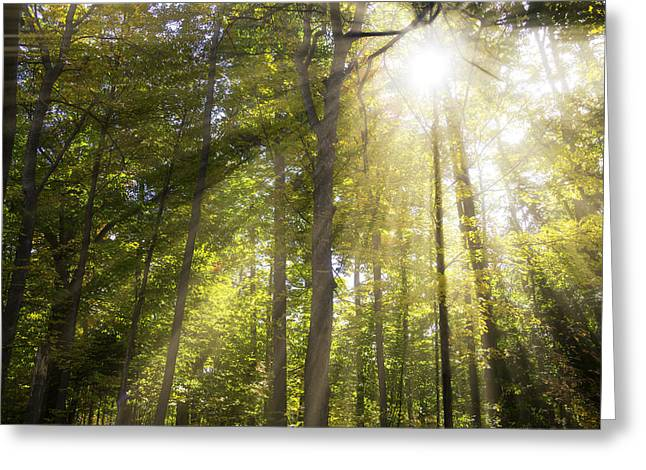 Sun Rays Through Trees Greeting Card by Garry Gay