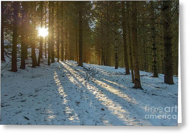 Sun Setting On Winter Woods Greeting Card by Norman Pogson