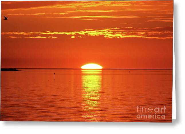 Sun Setting Over The Horizon Greeting Card by D Hackett