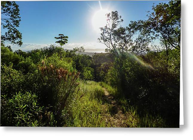 Sun Shining Over The Atlantic Forest Greeting Card