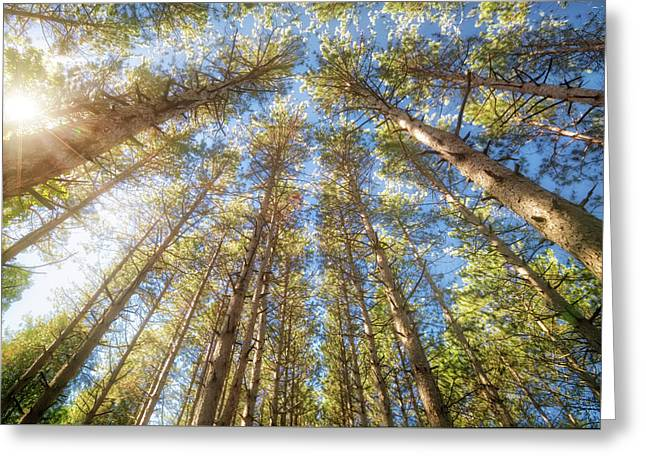 Sun Shining Through Treetops - Retzer Nature Center Greeting Card by Jennifer Rondinelli Reilly - Fine Art Photography