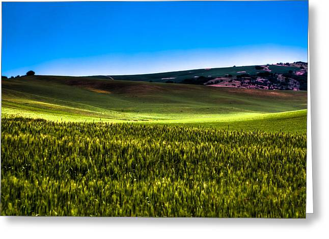 Sun Shinning On The Palouse Hills Greeting Card by David Patterson