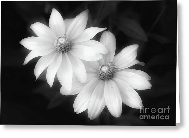 Sun Sisters In Black And White Greeting Card