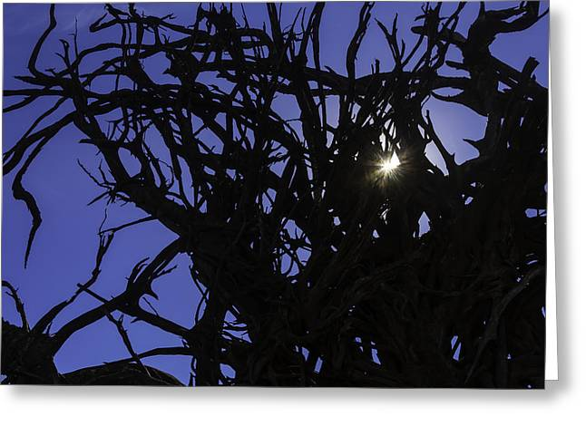 Sun Through Tree Roots Greeting Card by Garry Gay