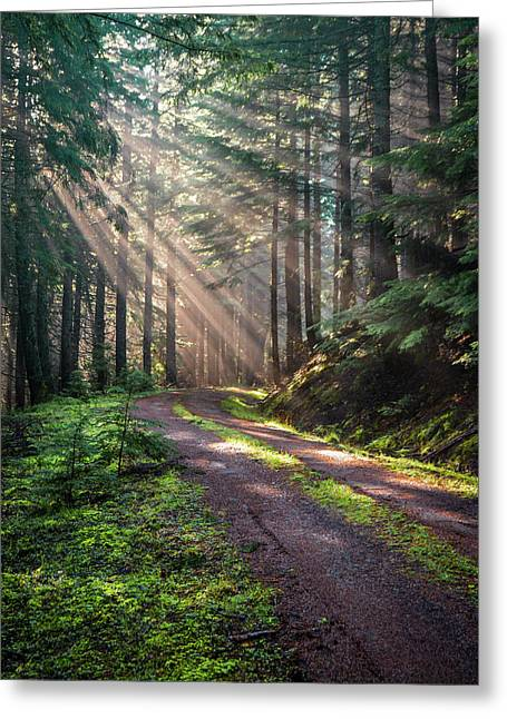 Sunbeam In Trees Portrait Greeting Card