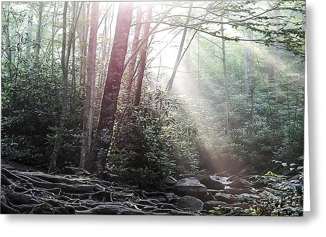 Sunbeam Streaming Into The Forest Greeting Card