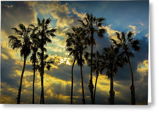 Greeting Card featuring the photograph Sunbeams And Palm Trees By Cabrillo Beach by Randall Nyhof