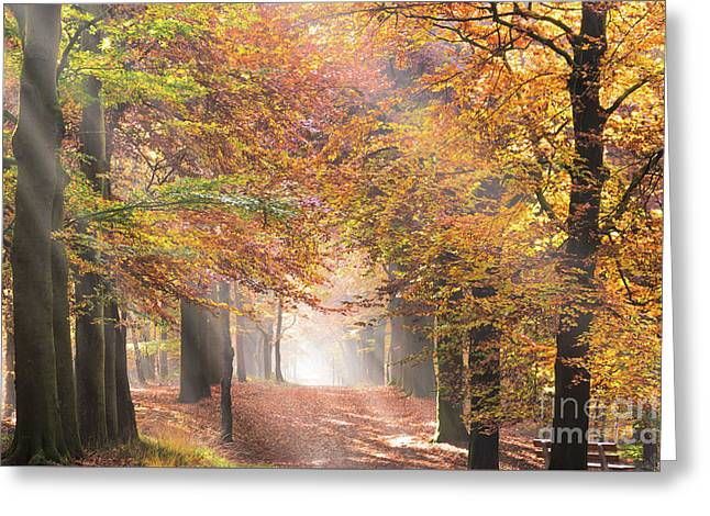 Sunbeams In A Forest In Autumn Greeting Card
