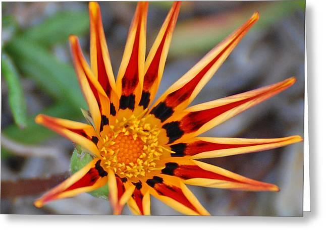 Sunbeams In Bloom Greeting Card by Jean Booth