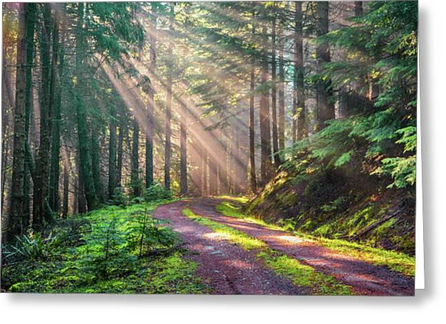 Sunbeams In Trees Greeting Card