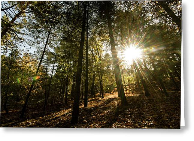Sunbeams Through  Forest Trees Greeting Card by Michalakis Ppalis