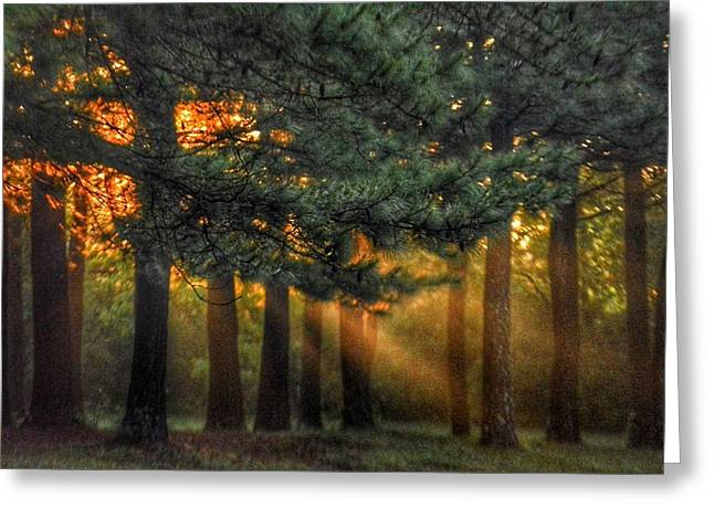 Sunbeams Through The Trees Greeting Card