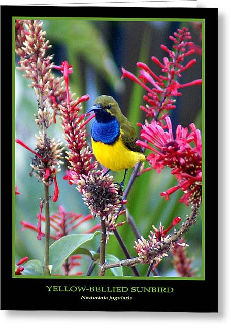 Sunbird Greeting Card by Holly Kempe