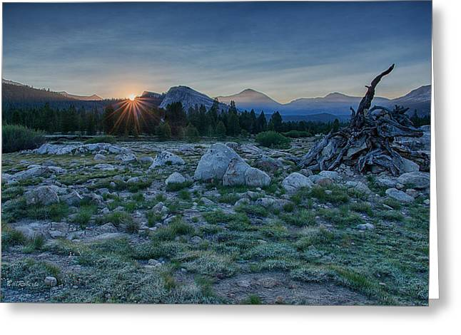 Sunburst In Tuolumne Greeting Card by Bill Roberts