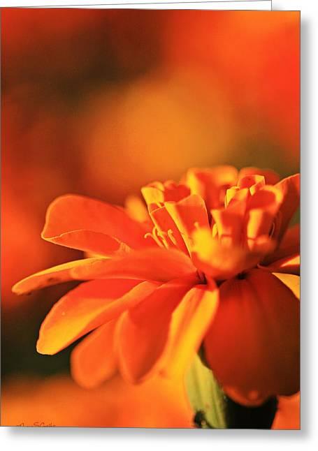 Sunburst Greeting Card