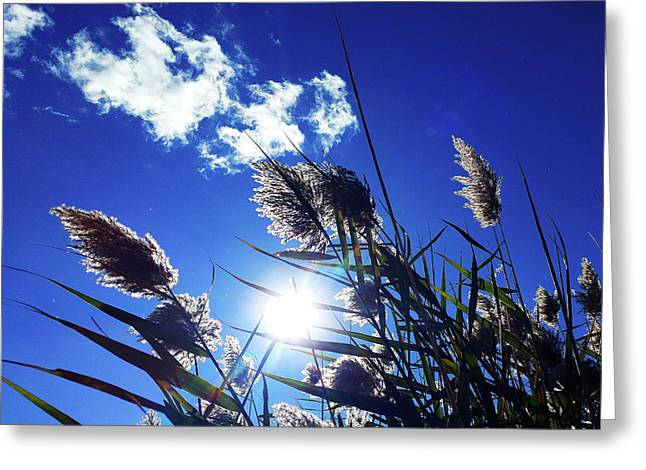Sunburst Reeds Greeting Card