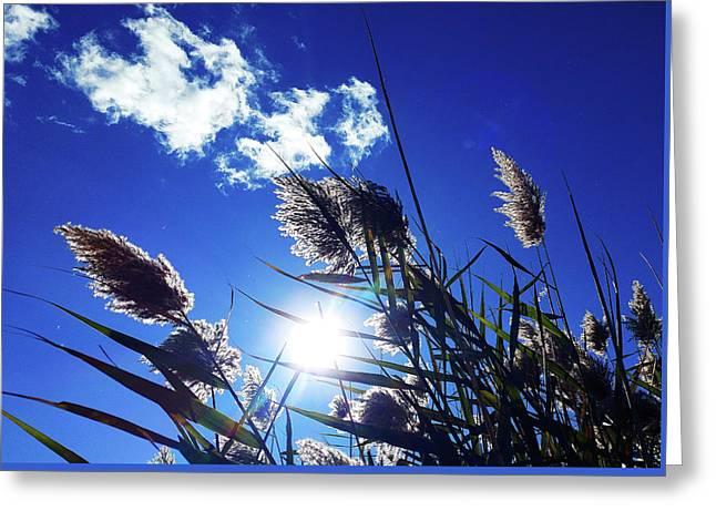 Sunburst Reeds Greeting Card