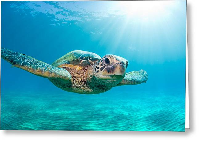 Sunburst Sea Turtle Greeting Card