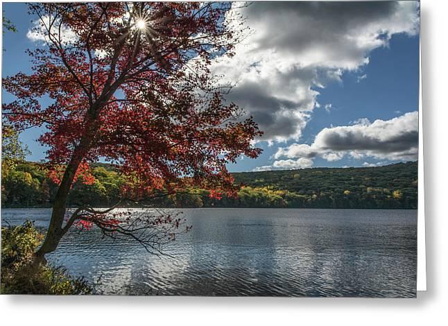 Sunburst Tree At Silvermine Lake Greeting Card