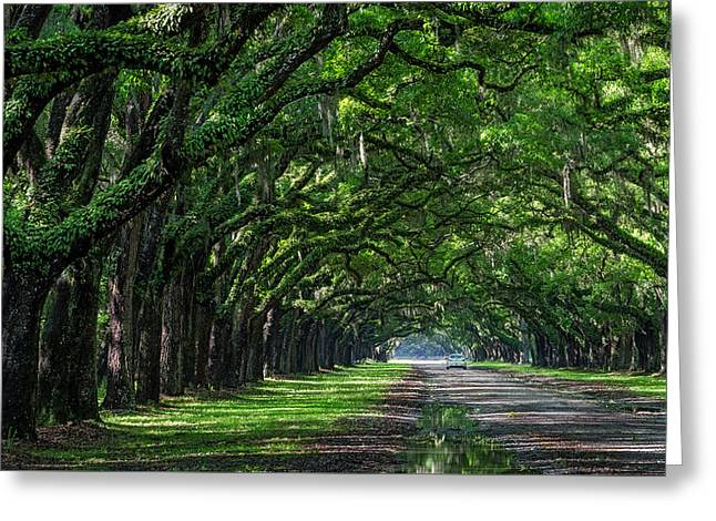 Sunday Drive Greeting Card by Michael Donahue