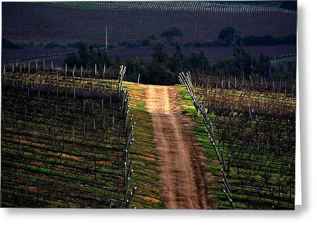 Sun Ray In The Vineyard Greeting Card by Fernando Lopez Lago