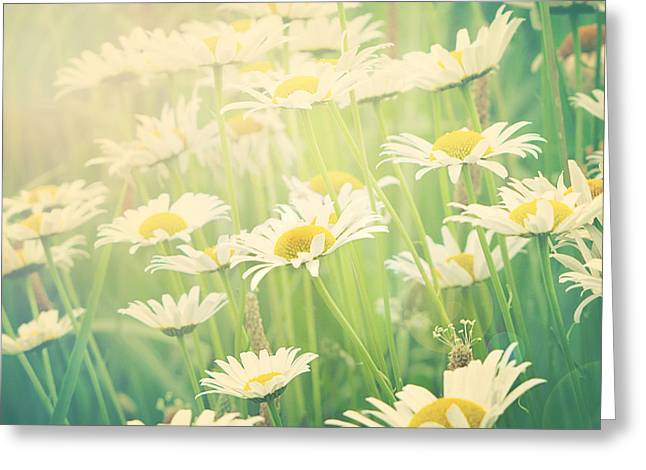 Sunday Morning Greeting Card by Amy Tyler