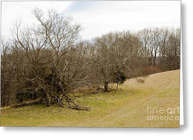 Sunday Trails Greeting Card by Victoria Lawrence