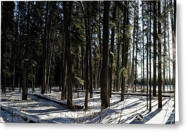 Greeting Card featuring the photograph Sundial Forest by Brad Allen Fine Art