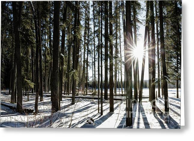 Sundial Forest Greeting Card by Brad Allen Fine Art
