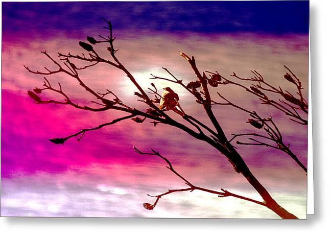 Sundown Greeting Card by Holly Kempe