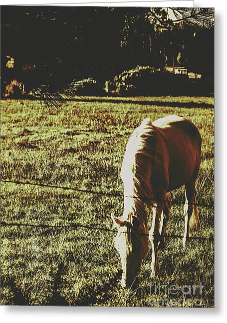 Sundown Horse Meadow Greeting Card