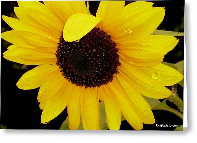 Sundrops Greeting Card by Lois Lepisto