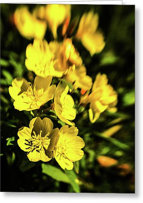 Greeting Card featuring the photograph Sundrops by Onyonet  Photo Studios