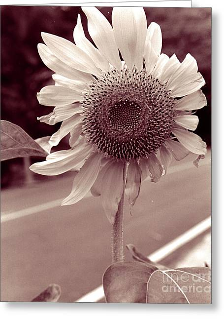 Greeting Card featuring the photograph Sunflower 1 by Mukta Gupta