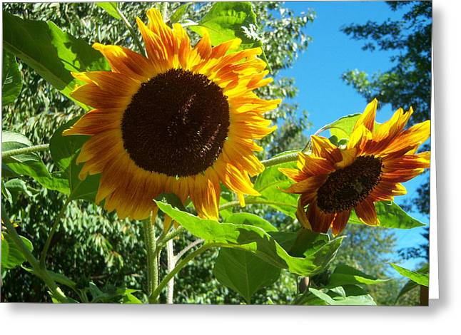 Sunflower 102 Greeting Card by Ken Day