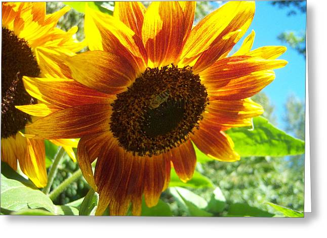 Sunflower 104 Greeting Card by Ken Day